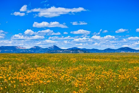 prairie-flowers-I-am-Wilderness