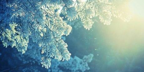 Sunlight-Frost-l