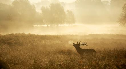 Lonely Deer 2